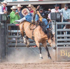 Colorado State Fair, Colorado Springs Happenings