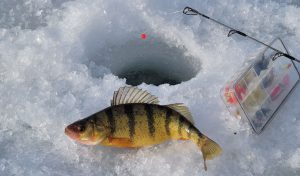 Ice Fishing Colorado