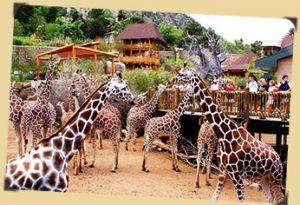 Cheyenne Mountain Zoo Colorado Springs