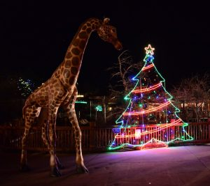 Electric Lights at Zoo